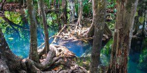 Необыкновенная река