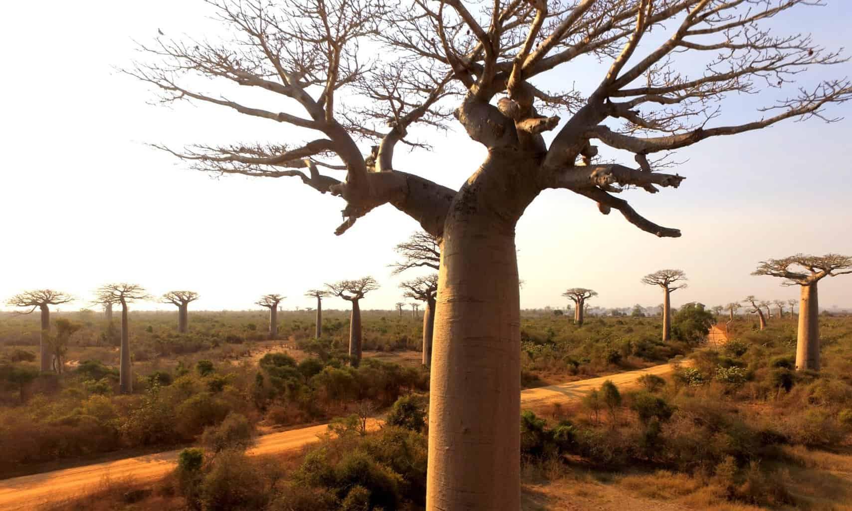 Пейзажи Мадагаскара