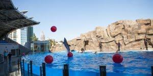 Дельфинарий в Батуми