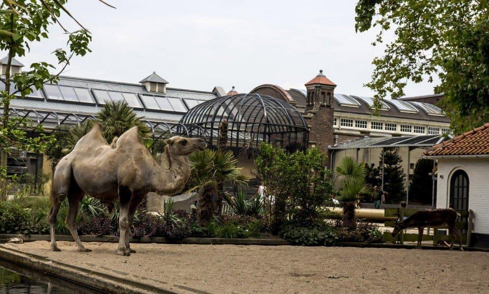 Зоопарк Артис