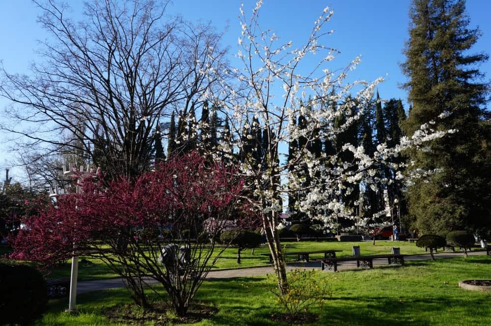 Наступление весны в марте в Адлере